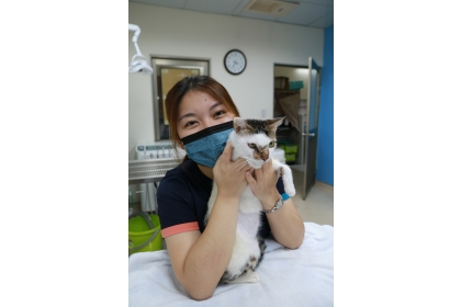 母貓阿醜經過興大的治療已康復,等待新家。
