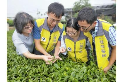 中興大學植物教學醫院10月16日在南投名間鄉瑞成茶廠舉辦「名間鄉茶葉友善防治推廣」活動。