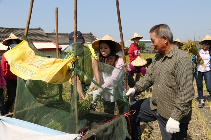 大學生體驗農村早期使用的腳踏式脫穀機