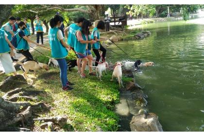 緝毒幼犬在中興湖進行社會化訓練