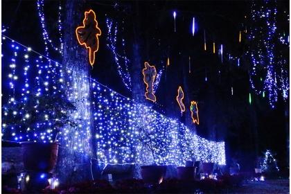 點亮惠蓀林場七棵高大台灣杉組成的希望之樹