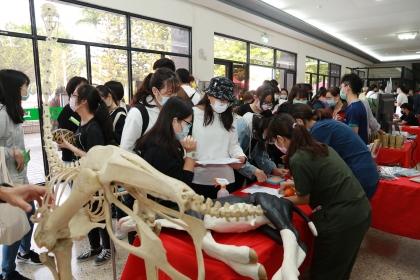 獸醫系展示乳牛、骨骼等各式教具