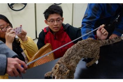 中興大學團隊在特生中心測量石虎實際大小與眼高。圖/中興大學機械系 提供