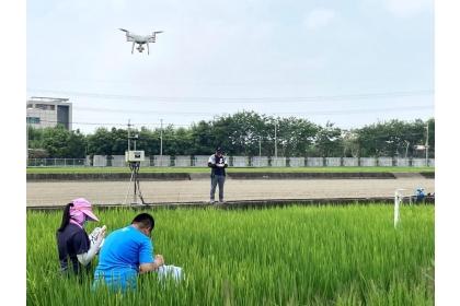 圖2、人員於水稻田間進行現地植株生理參數調查及空拍機進行植株影像拍攝