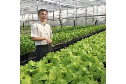 腎食堂低鉀蔬菜採離地栽種法,把蔬菜種在架子上,好處是非常乾淨,可以隔離病原菌,減少來自土壤的污染,達到可以生食的標準。